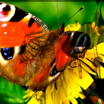 Existencial  /  Flor.mariposa